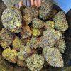 Buy Ak47 weed online Europe